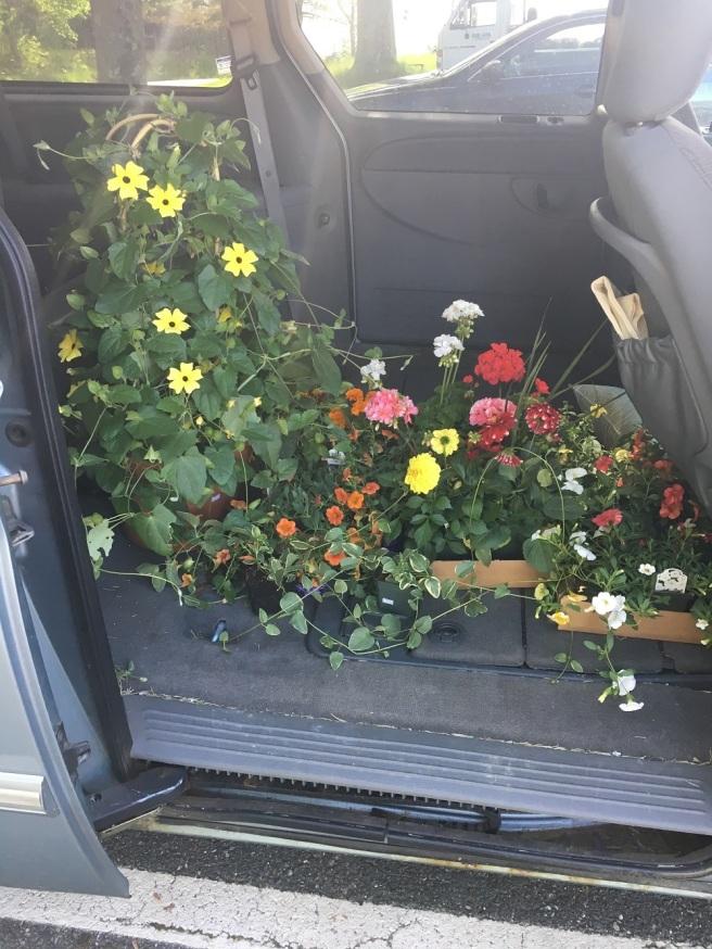 car Plants